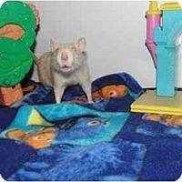 Adopt A Pet :: Noel and Tinsel - Hamburg, PA