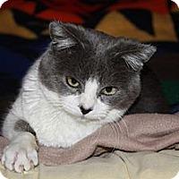 Adopt A Pet :: Benjamin - San Luis Obispo, CA