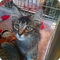 Adopt A Pet :: Millie - Easley, SC