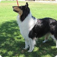 Adopt A Pet :: Elvira - Riverside, CA