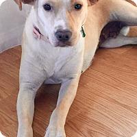 Adopt A Pet :: Leia - Long Beach, CA