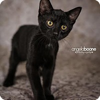 Adopt A Pet :: Skittles - Plymouth, MN
