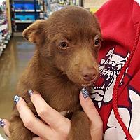 Adopt A Pet :: Cocoa - Fresno, CA