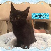 Adopt A Pet :: ARTHUR - Hamilton, NJ