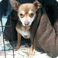 Adopt A Pet :: Snickers - Muskegon, MI