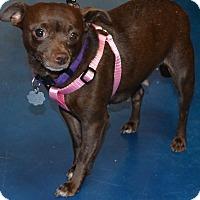 Adopt A Pet :: Faith - Simi Valley, CA
