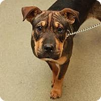 Adopt A Pet :: Abbie in TN - Mira Loma, CA