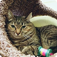 Adopt A Pet :: Cutie - Edwards AFB, CA