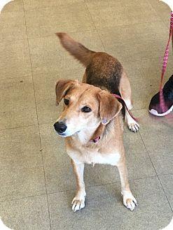 German Shepherd Dog Mix Dog for adoption in Austin, Texas - Julia