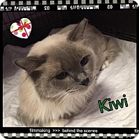 Adopt A Pet :: Kiwi - Harrisburg, NC