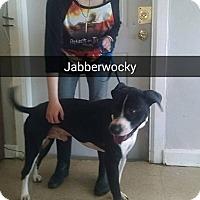 Adopt A Pet :: Jabberwocky - Marianna, FL