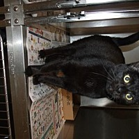 Adopt A Pet :: Gracie - Napoleon, OH