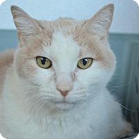 Adopt A Pet :: Rescue - Newberg, OR