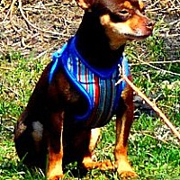 Adopt A Pet :: Dublin - Columbia Heights, MN