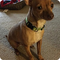 Adopt A Pet :: Winston - Harrisburg, PA