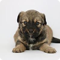 Adopt A Pet :: Kanoa - Yucaipa, CA
