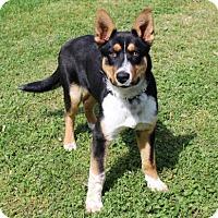 Adopt A Pet :: PUPPY ROMEO - Allentown, PA