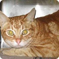 Adopt A Pet :: ALFIE - Camarillo, CA