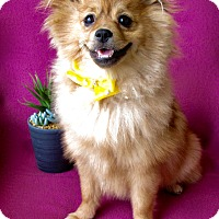 Adopt A Pet :: Honey - Irvine, CA