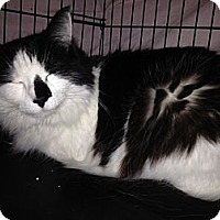 Adopt A Pet :: Gemma - East Hanover, NJ