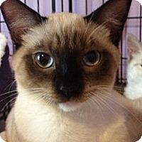 Adopt A Pet :: Toley - Monroe, GA