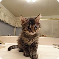 Adopt A Pet :: KEANU - Phoenix, AZ