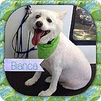 Adopt A Pet :: Jackson NJ - Bianca - New Jersey, NJ