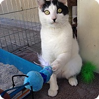 Adopt A Pet :: Toby *NO ADOPTION FEE* - Lafayette, CA