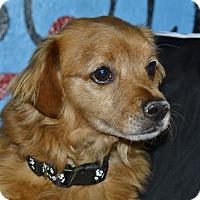 Adopt A Pet :: Randy - Meridian, ID