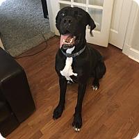 Adopt A Pet :: Bentley - Stevens Point, WI