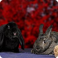 Adopt A Pet :: California - Marietta, GA
