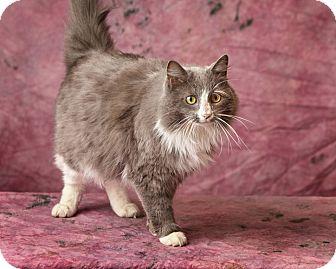 Domestic Longhair Cat for adoption in Harrisonburg, Virginia - Warren Peace