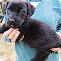 Adopt A Pet :: NORA - Lincolndale, NY