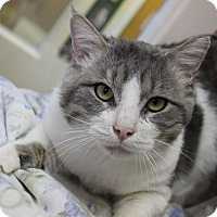 Adopt A Pet :: Oro - Fountain Hills, AZ
