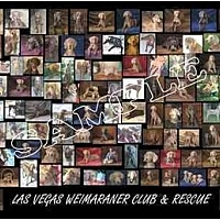 Adopt A Pet :: LVWCR COME MEET US - Las Vegas, NV
