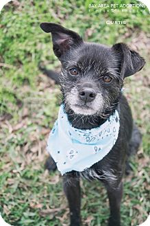 Terrier (Unknown Type, Small) Mix Dog for adoption in San Leon, Texas - Curtis