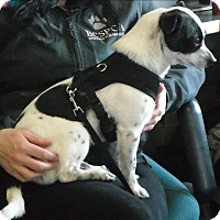 Adopt A Pet :: Dynamite - Powell River, BC