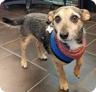 Jack Russell Terrier Dog for adoption in Freeport, New York - Toto