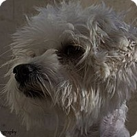 Adopt A Pet :: Tiana - Mission Viejo, CA