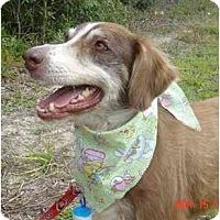 Adopt A Pet :: Sammy - Orlando, FL