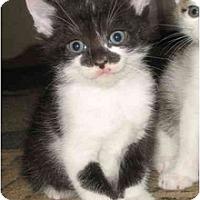 Adopt A Pet :: Robin's kittens - Cincinnati, OH