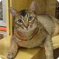 Adopt A Pet :: OLIVER - Diamond Bar, CA