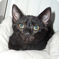 Adopt A Pet :: umber - Dallas, TX