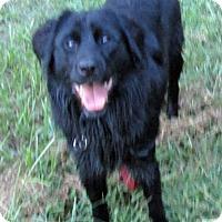Adopt A Pet :: Drew - Houston, TX