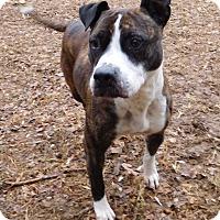 Adopt A Pet :: Queenie - House Springs, MO