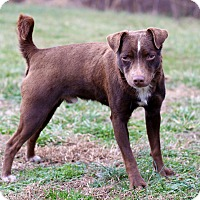Adopt A Pet :: Quint - Waldorf, MD