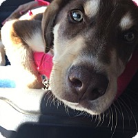 Adopt A Pet :: Rigby - Roswell, GA