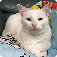 Adopt A Pet :: Kapri - Palo Cedro, CA