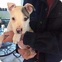 Adopt A Pet :: Skye - Kettering, OH