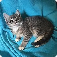 Adopt A Pet :: Sofie - Tampa, FL